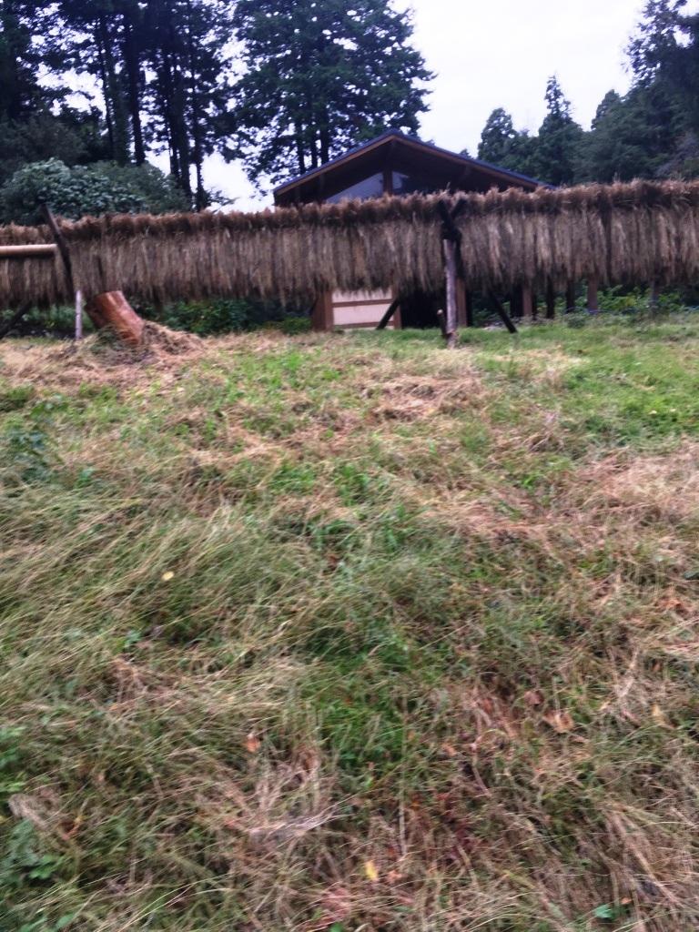 こども自然公園(大池公園)の田んぼでの稲刈り