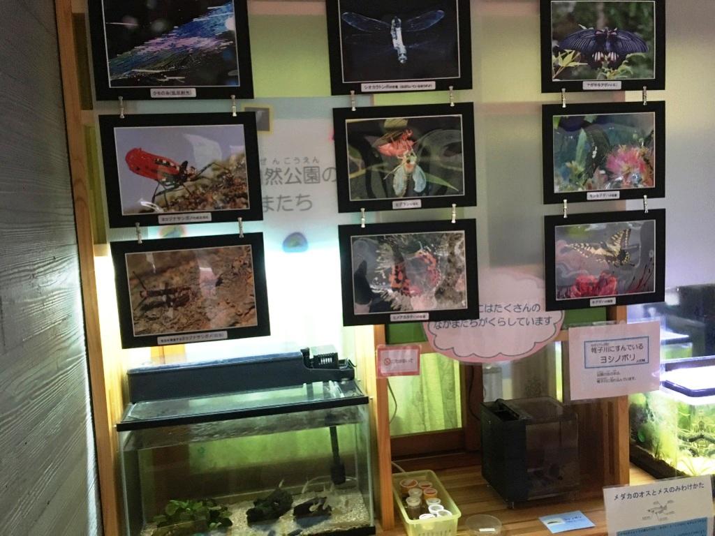 こども自然公園(大池公園)のレストハウスの中にある展示物
