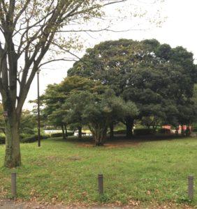こども自然公園(大池公園)の風景