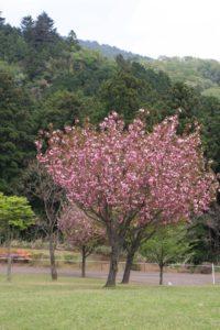 あいかわ公園に咲いている花