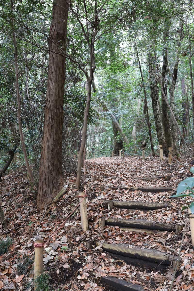 森の中の遊歩道