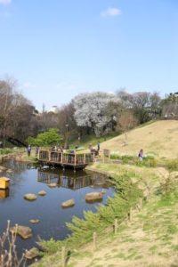 池の周りの散歩道
