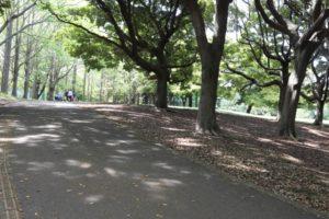 根岸森林公園の散歩道