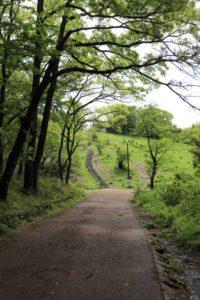小川沿いの道