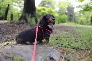 こども自然公園での犬の散歩