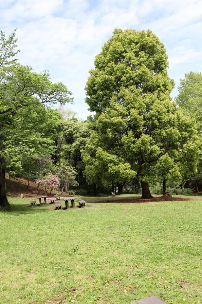 ピクニック広場