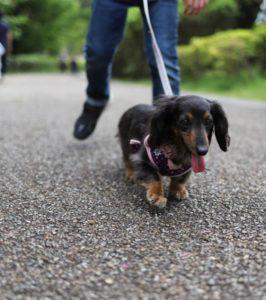 あいかわ公園の犬の散歩