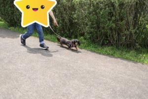 あいかわ公園での犬の散歩