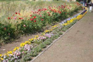 ソレイユの丘の花畑