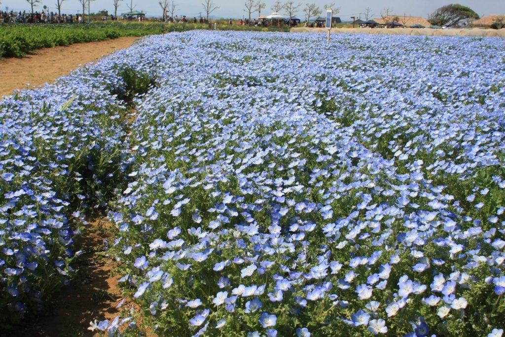 ソレイユの丘に咲いている花