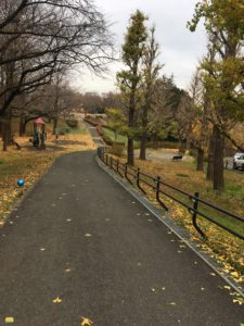 県立保土ヶ谷公園の散歩道