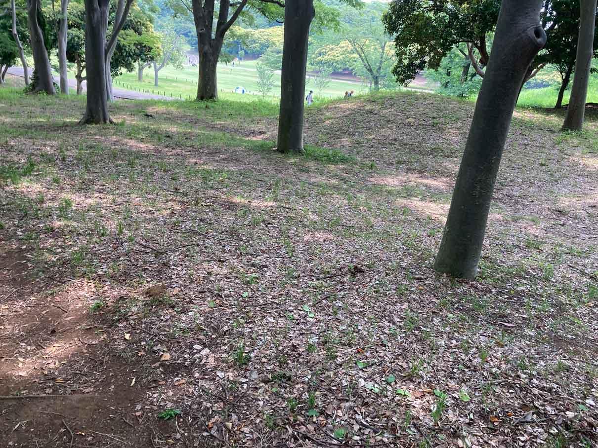 土の地面の散歩道