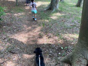 根岸森林公園の犬の散歩におすすめの散歩道