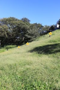 保土ヶ谷公園の芝生の斜面すべり遊び
