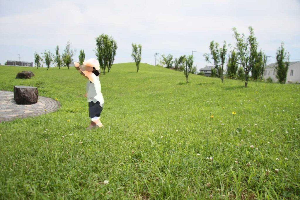 茅ヶ崎里山公園の芝生広場