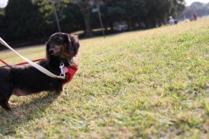 犬と子どもが楽しめる公園の画像