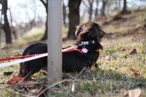 根岸森林公園での犬の散歩