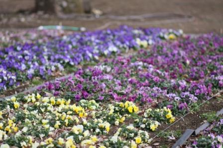 相模原公園の花の写真