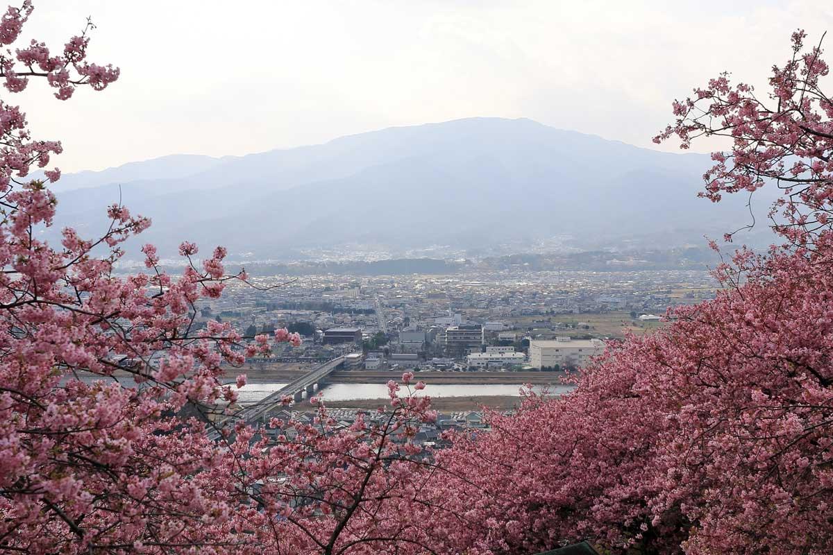桜と街並み