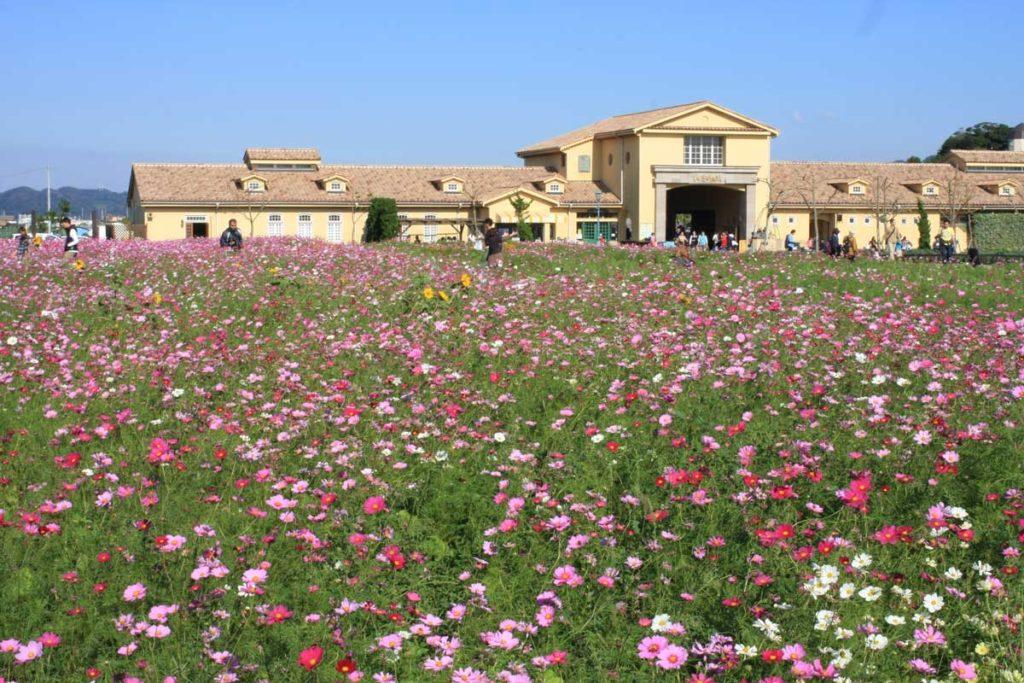 ソレイユの丘の入口にある花畑