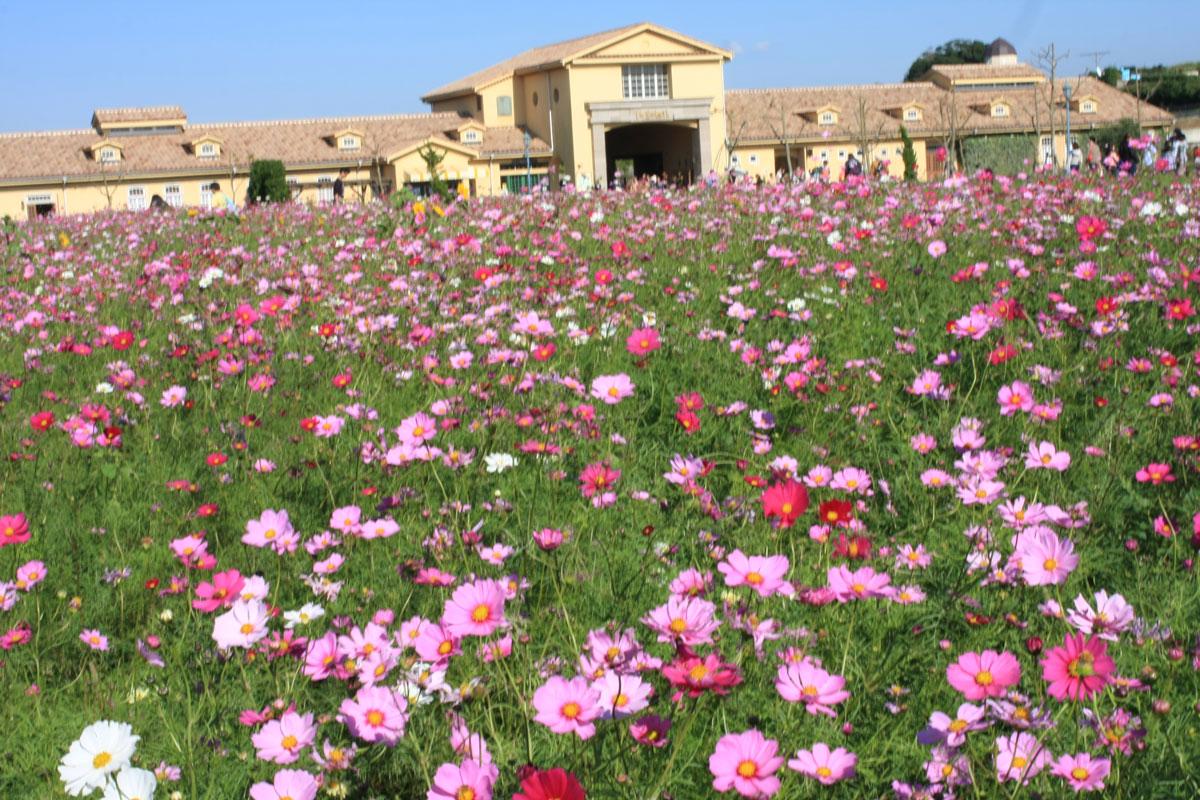 ソレイユの丘の花
