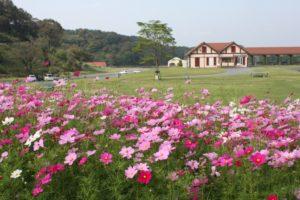 東京ドイツ村の花畑