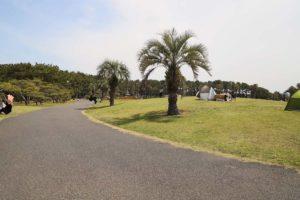 辻堂海浜公園の散歩道