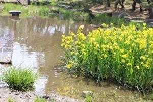 池に咲いている花