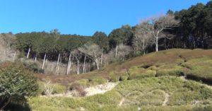 姫の沢公園の森
