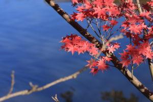 こども自然公園(大池公園)の紅葉