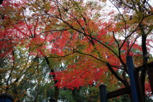 フィールドアスレチック横浜つくし野コースの紅葉