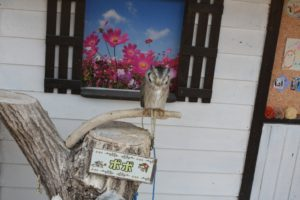 掛川花鳥園のふくろう