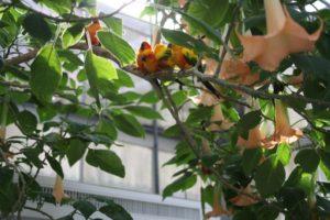 掛川花鳥園の鳥