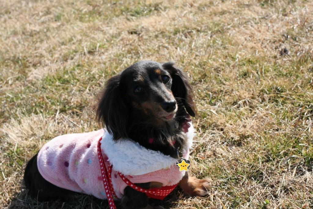 水元公園での犬の散歩