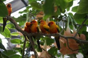 掛川花鳥園の鳥たち