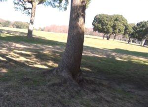 木がある広場