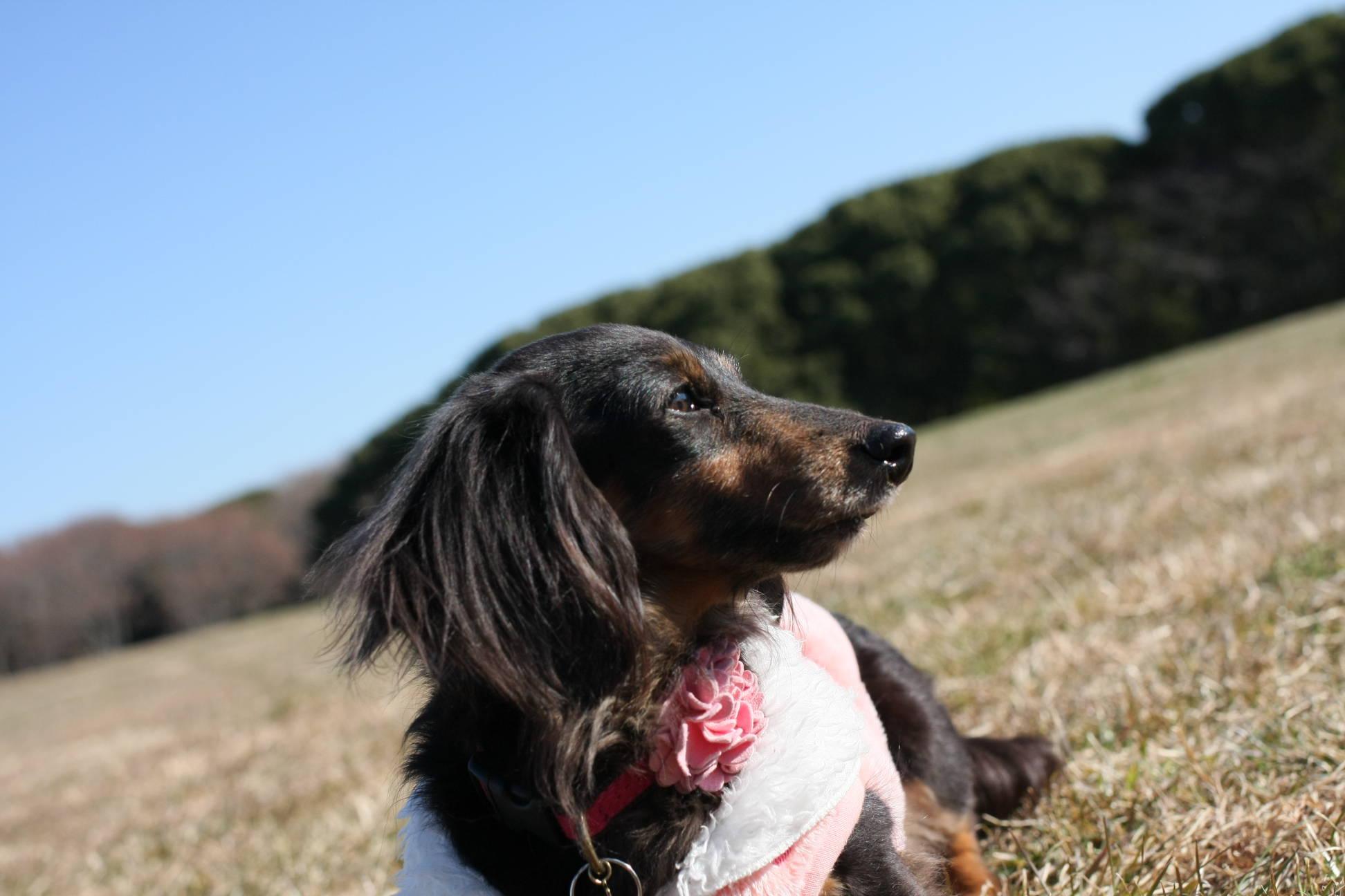 葛飾区 水元公園での犬の散歩
