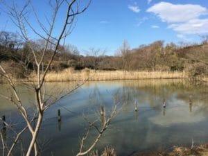 舞岡公園 池の画像
