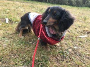 舞岡公園での犬の散歩