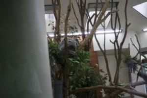 埼玉こども動物自然公園のコアラ