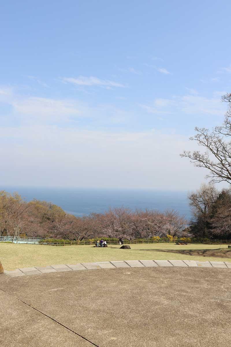 広場と桜と先に見える海
