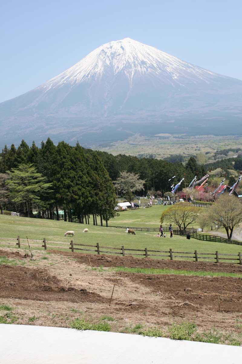牧場とその先に見える富士山
