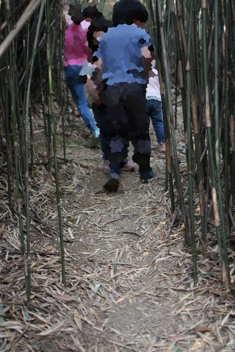 竹に囲われた道