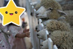 まかいの牧場の羊