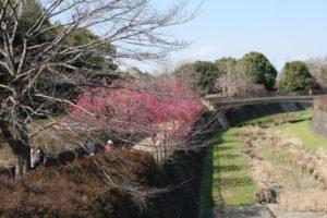昭和記念公園の散歩道の花
