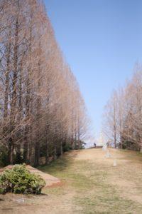 昭和記念公園の散歩道