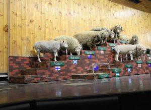 羊のショー
