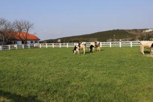 うしの牧場