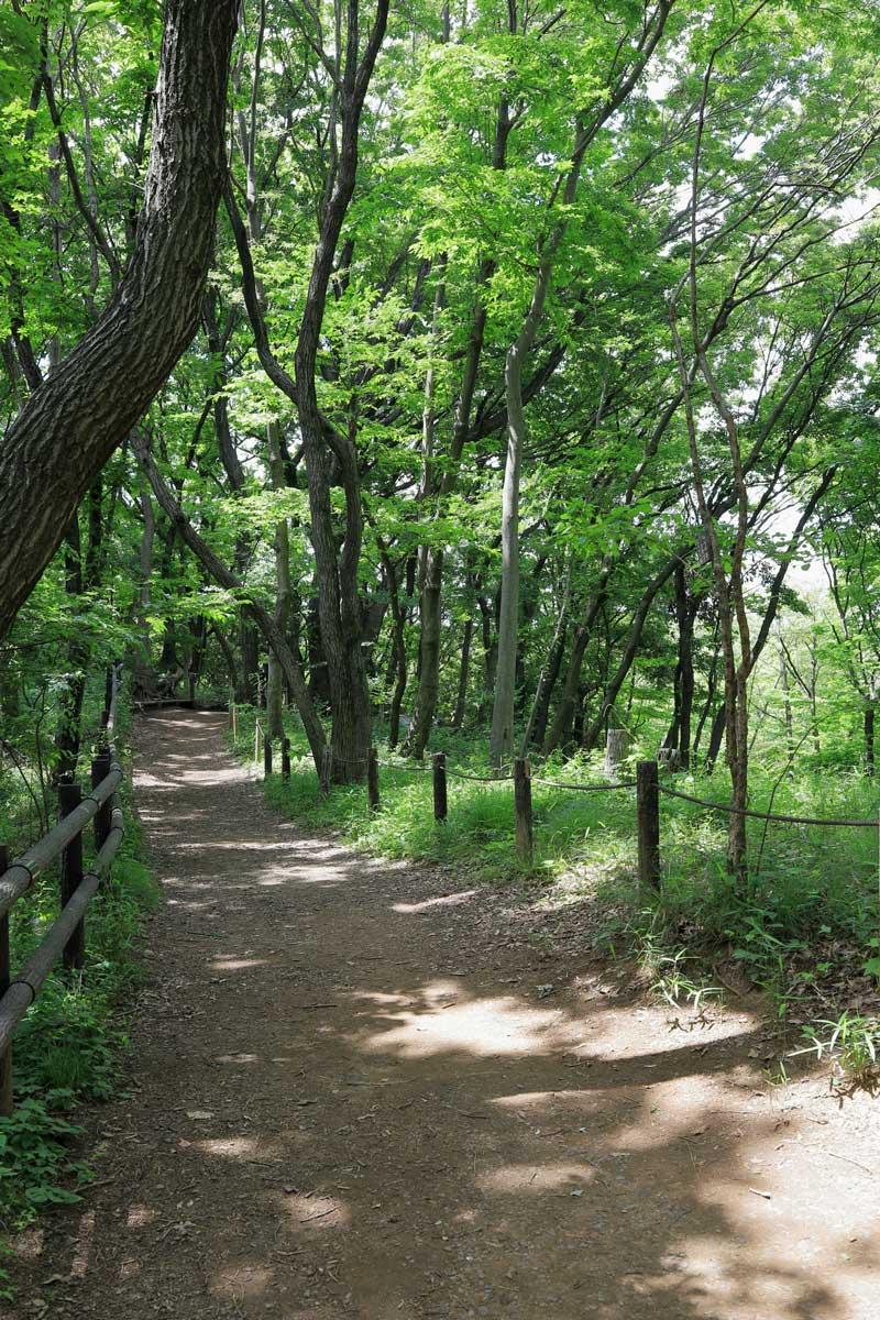 森に囲まれた遊歩道