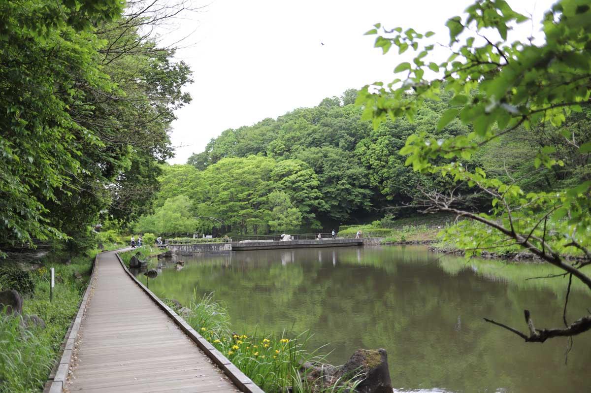 池のほとりの遊歩道